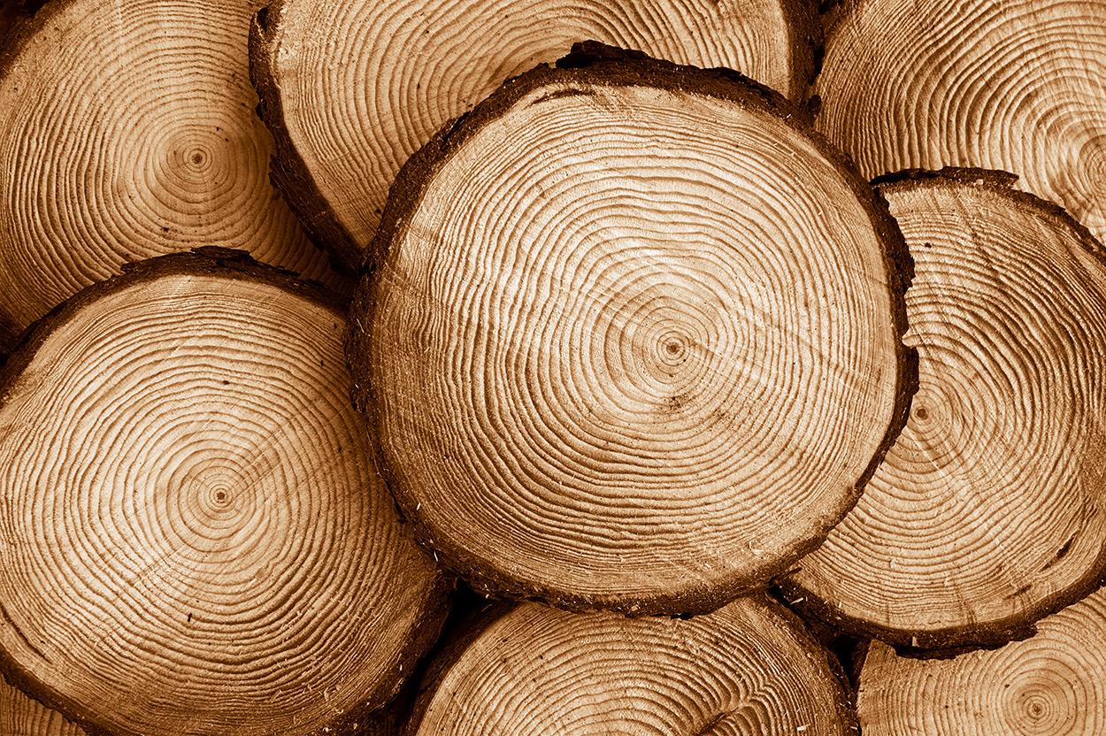madera-de-pino-1